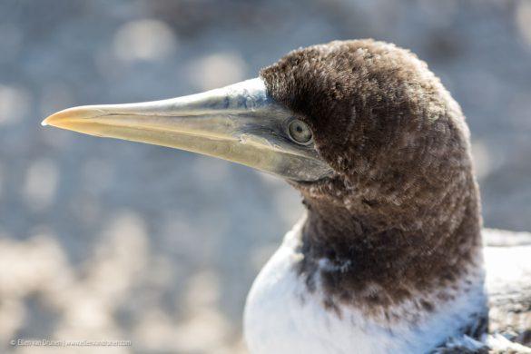 Ecuador – Galapagos 2014