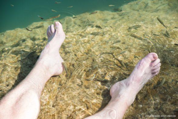 Fish nibbling Elmars feet at Wadi Bani Khalid