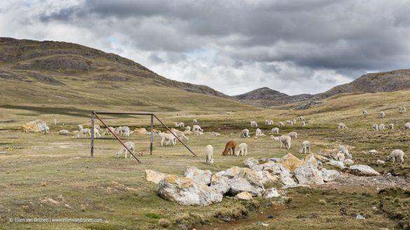 Peru 2014